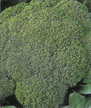 "Broccoli ""Calabrais"""
