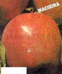 .Macieira Jonagored - Malus domestica - Nov a Mar