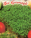 Garden Cress or Garden Pepper Cress for Sprouting - Biol�gico