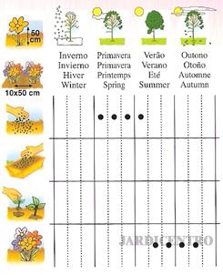 Abóbora - Cabacinha Ornamental Mistura - JARDICENTRO LOJA ONLINE